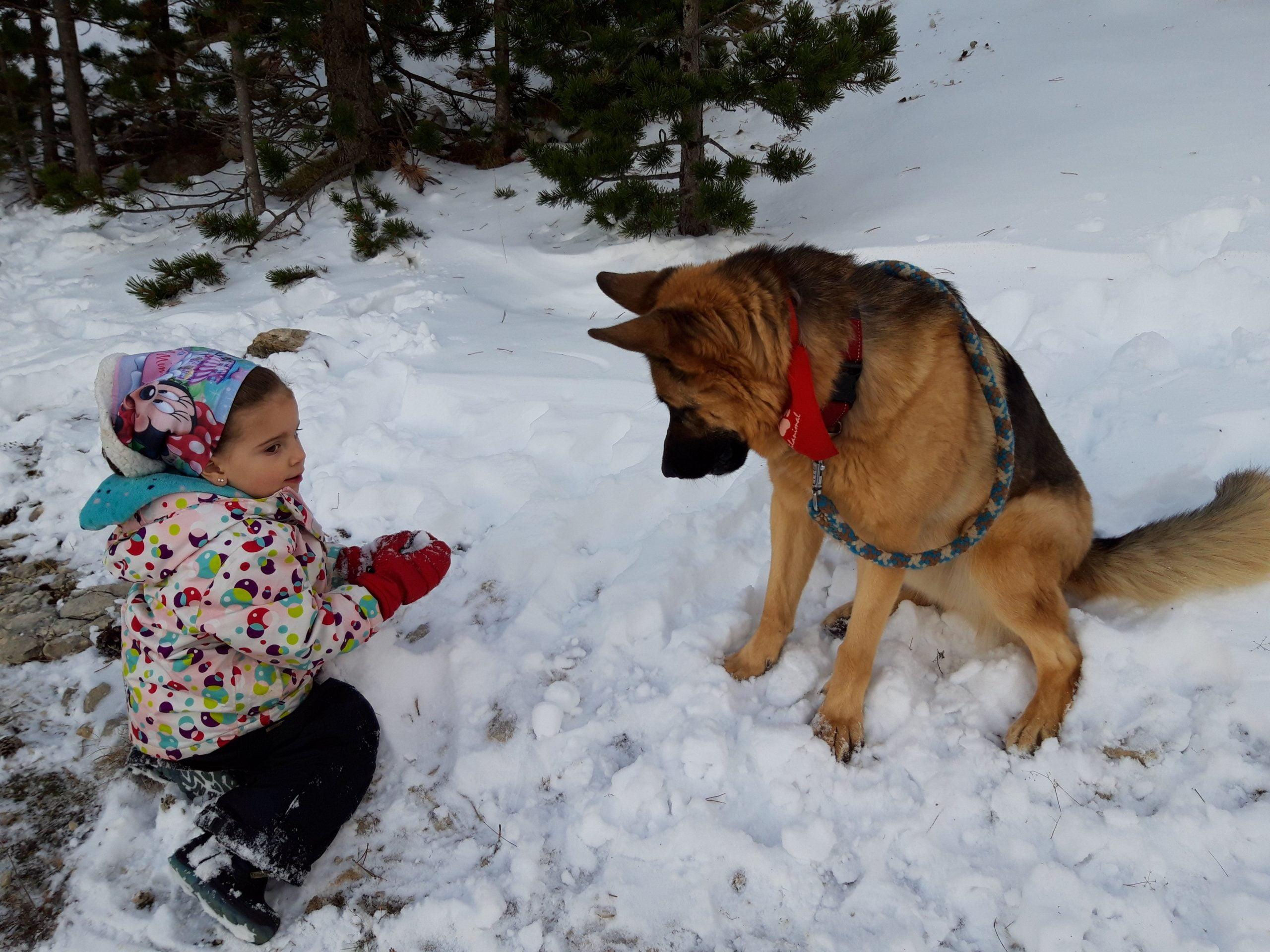 Jugando en la nieve perro y pequeñina