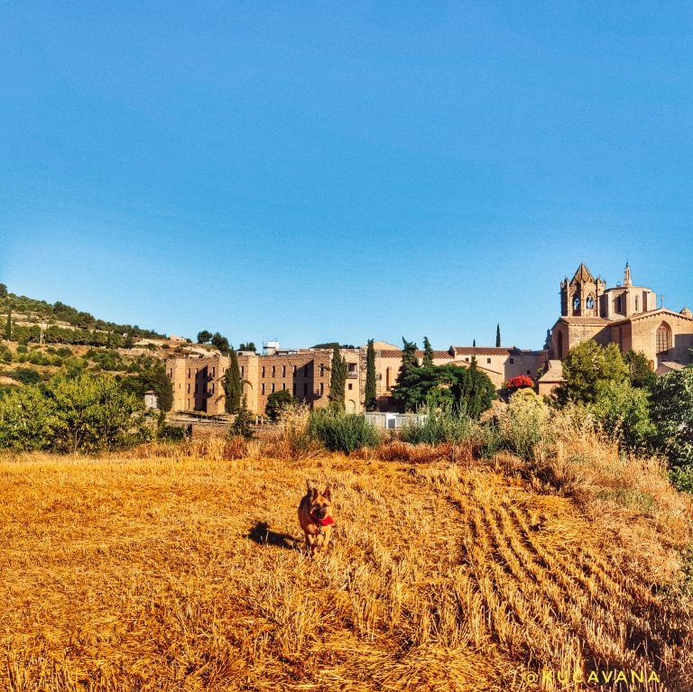 Monestir Vallbona de les Monges ( Urgell )