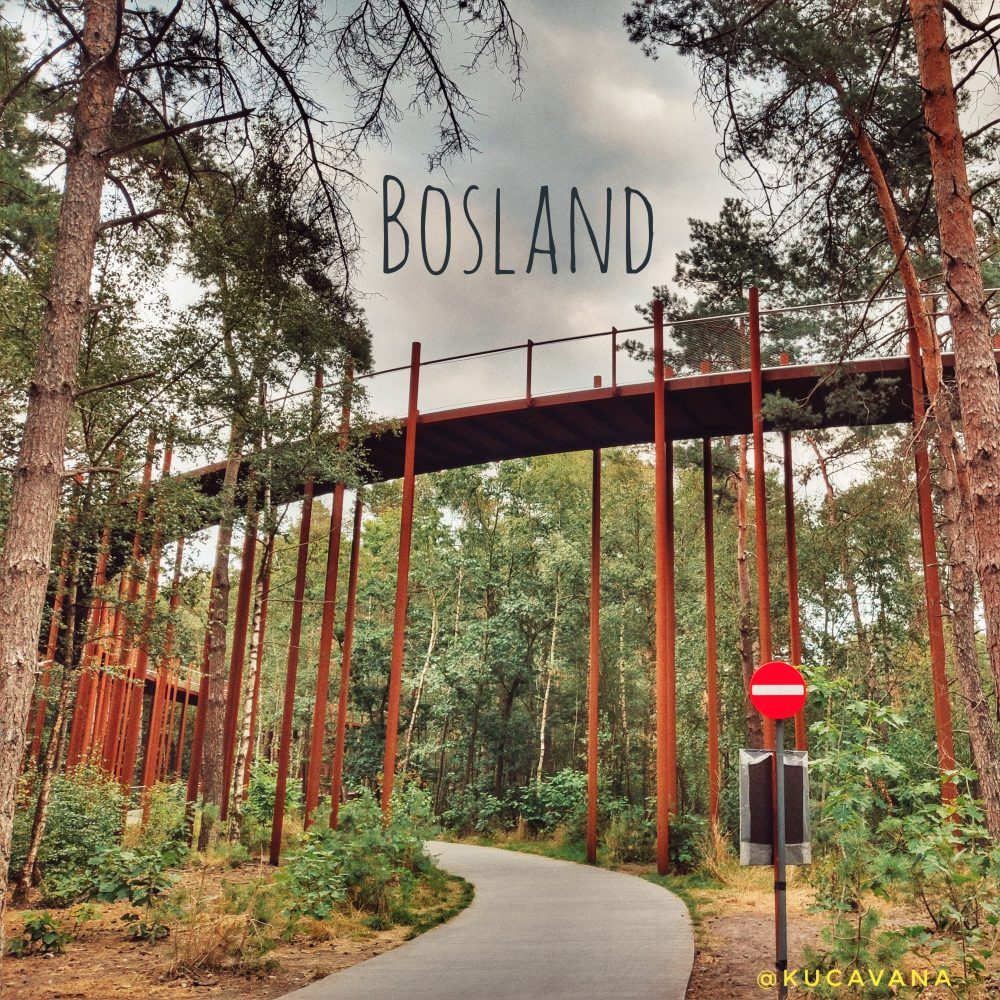 Bosland Limburgo ruta ciclista por encima de los arboles