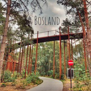 Bosland: más de 400 km de rutas en bici, ¡hasta por encima de los árboles!