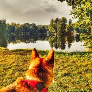 Lee más sobre el artículo Parque Nacional de Roztocze: ¡una tierra mágica te espera!