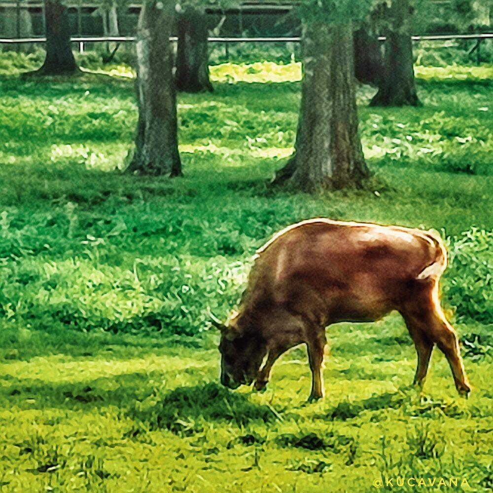 Bialowieza, uno dei parchi naturali più antichi d'Europa