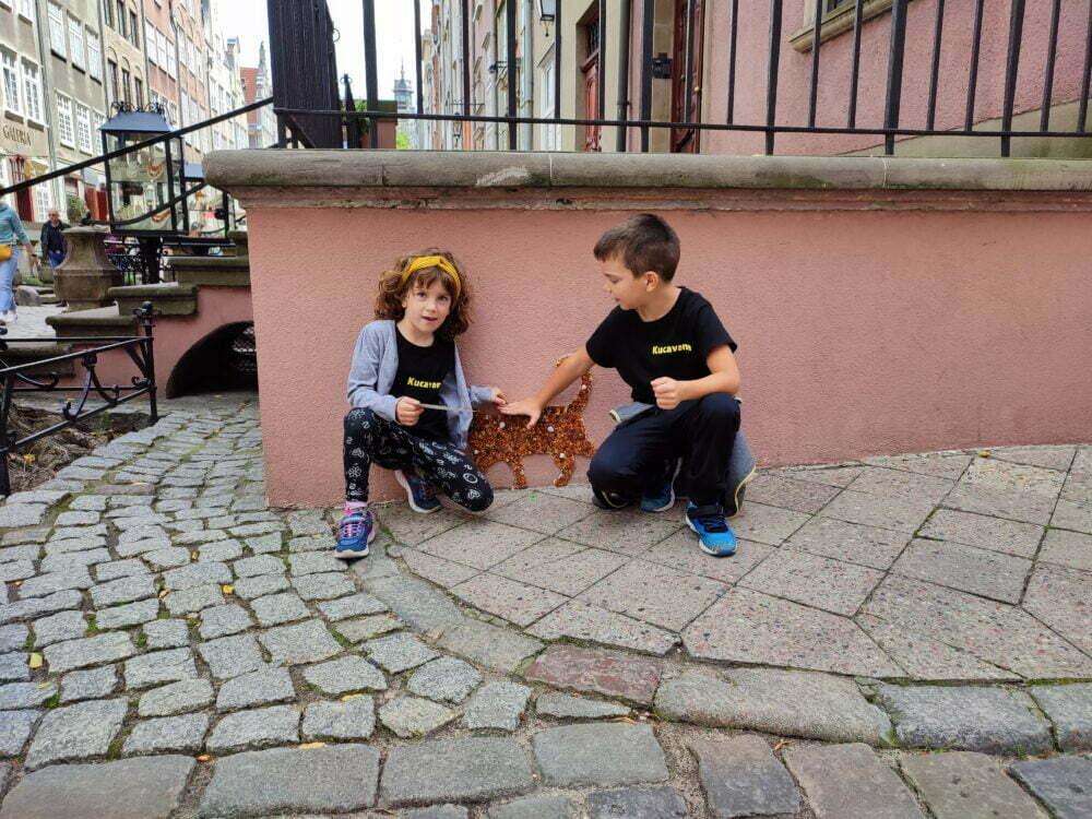 Chat ambre à Gdansk