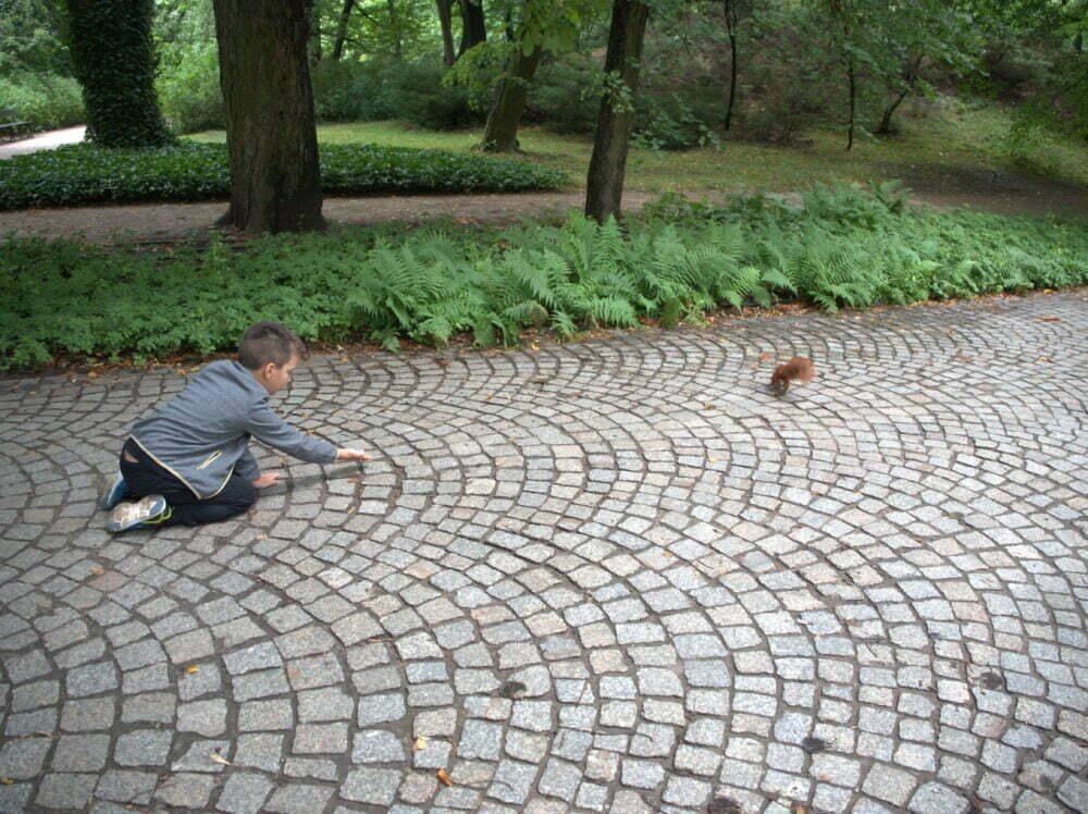 Ardillas del Parque Real Lazienki